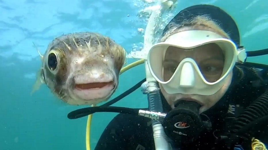 pufferfish selfie storyful 1