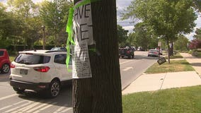 Lake Drive trees could go for bike lanes, 'a tragedy,' neighbors say
