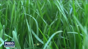 Safer lawn care for your family and the environment