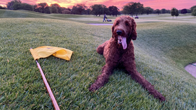 Westmoor Country Club already experiencing dog days of summer