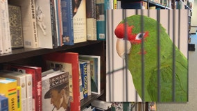 Parrot found at Bayshore, owner wanted