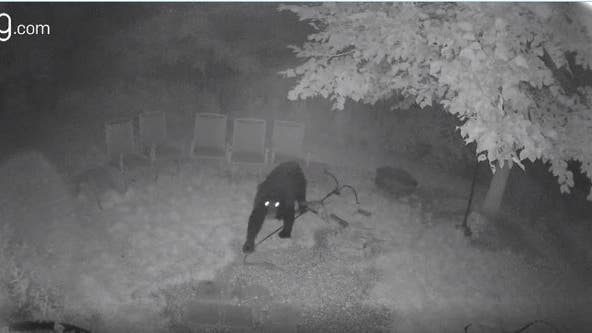 Beware of black bears: Wisconsin DNR on how to stay safe