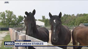 MKE Urban Stables: Home to MPD Mounted Patrol