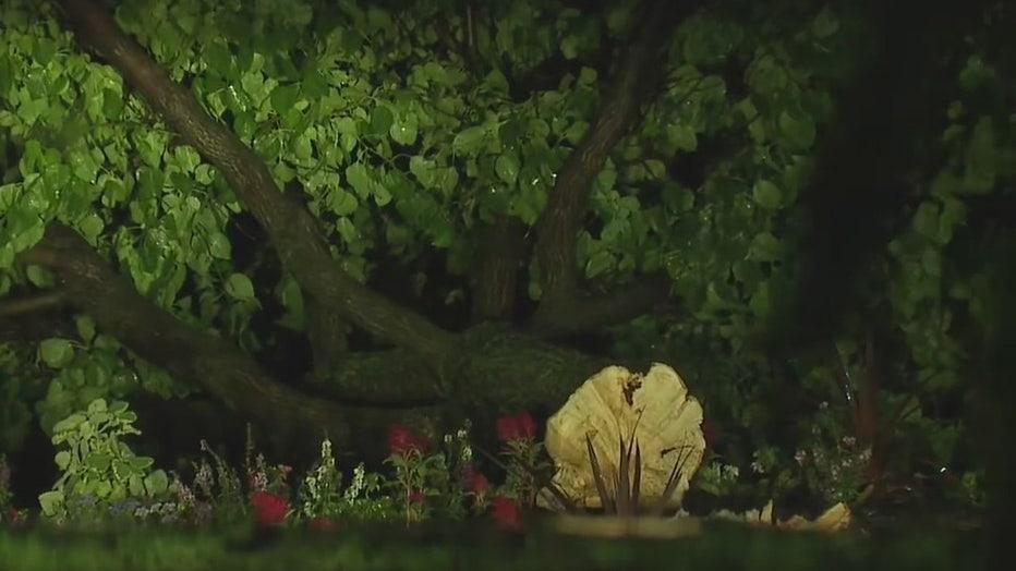 Downed tree in Oconomowoc area