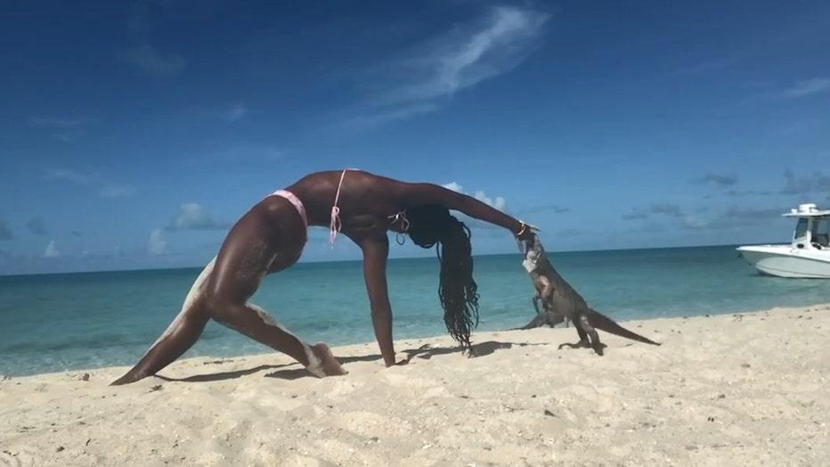 Biting iguana still edit