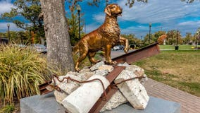 Dogs of 9/11: Heroic canines combed debris, offered comfort