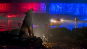 Milwaukee County Zoo's 'Boo at the Zoo' returns