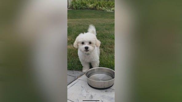 Oak Creek family's puppy, car stolen in Milwaukee