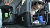 Dogs land in Waukesha; hurricane impacted Louisiana shelters