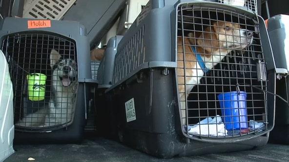 Dogs land in Waukesha, hurricane impacted Louisiana shelters