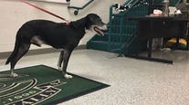 Pflugerville ISD students creating mobility device for three-legged dog