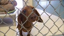 WCRAS, Georgetown Animal Shelter offering free adoptions this weekend
