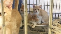 """Williamson County Regional Animal Shelter """"barks in the Mew Year"""" with free adoptions"""
