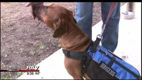 Louisiana inmates train service dogs to help veterans