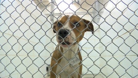 Taylor Animal Shelter in need of volunteers to walk dogs