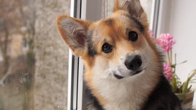 Cedar Park company ViaGen cloning favorite pets