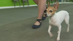 Camp Bow Wow shares heat safety tips to keep pets safe this summer