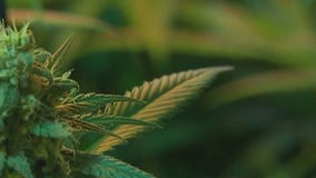John Boehner visits SXSW to discuss legalizing marijuana