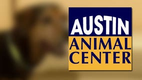 Austin Animal Center opens at full capacity, facing space crisis for dogs