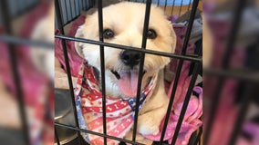 """Austin animal shelters offer """"Name Your Price"""" adoptions this weekend"""