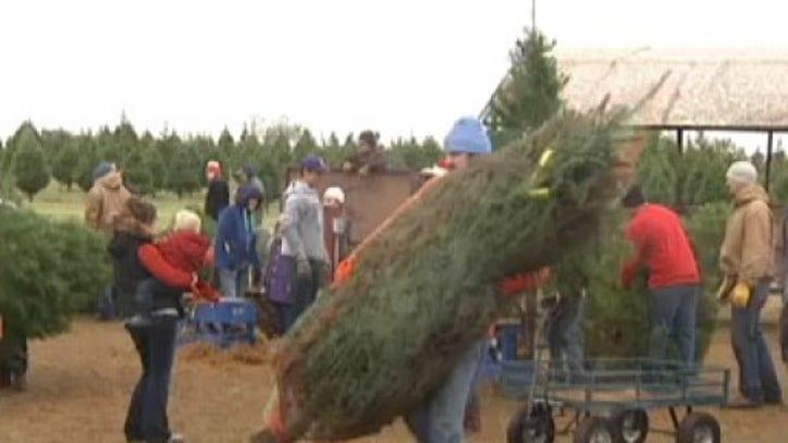Elgin Christmas Tree Farm.Elgin Christmas Tree Farm Fox 7 Austin