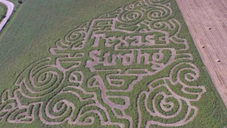 Cornfield TexasStrong_1505250423182-409650.jpg