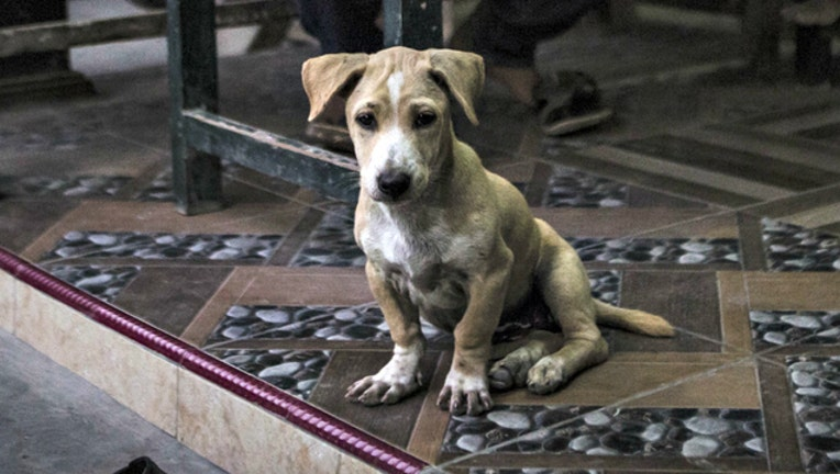 GETTY dog sad_1543960727331.jpg-404023.jpg