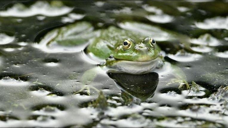 Getty_frog_new_1551391929480-405538.JPG
