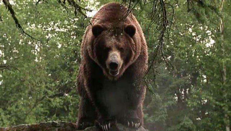Grizzly-Bear_1467315734804.jpg