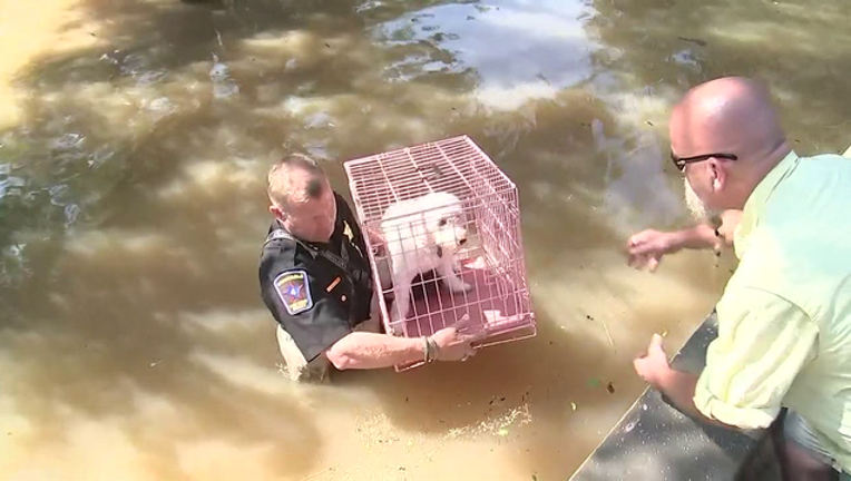 Homeowners Reuinted With Pets in Houston  (4)_1504197271848-408795-408795.png