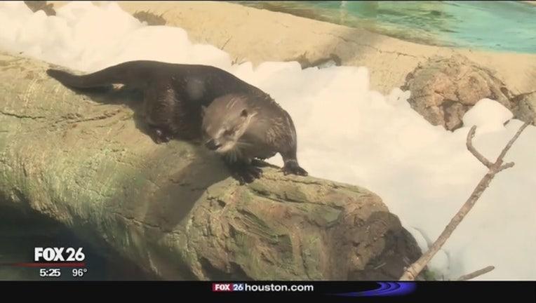 Houston_Zoo_hosts_annual_snow_day_1_20160716232525-408795
