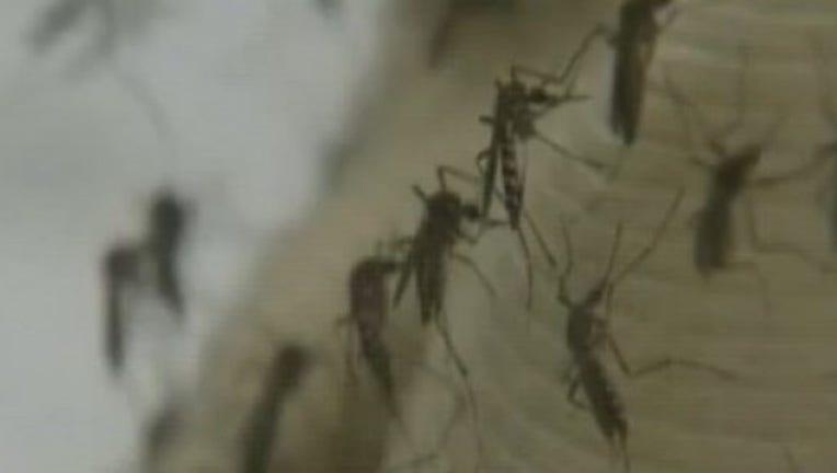 Mosquito_season_beginning_to_peak_0_20170809155305