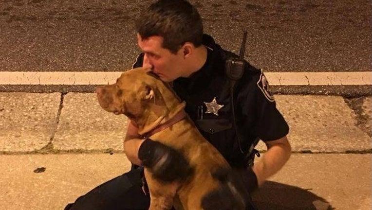 Officer Comforts Pit bull_1477672347430-401096.jpg