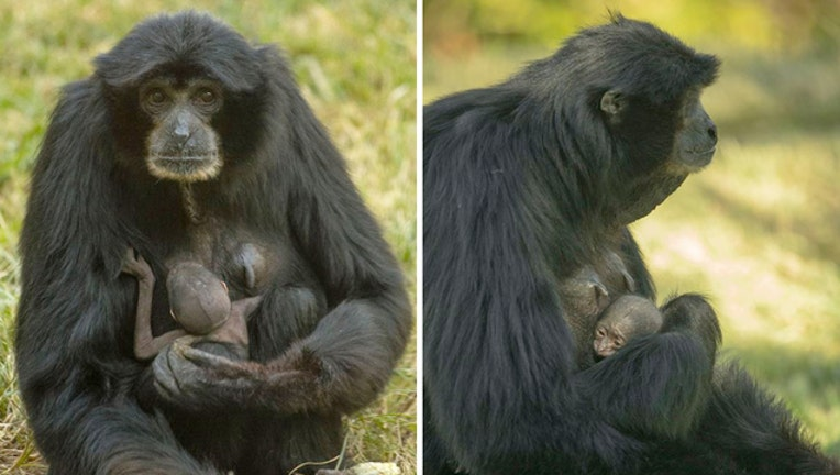 San Diego Zoo_new baby_112118 _1542805972015.jpg-403440.jpg