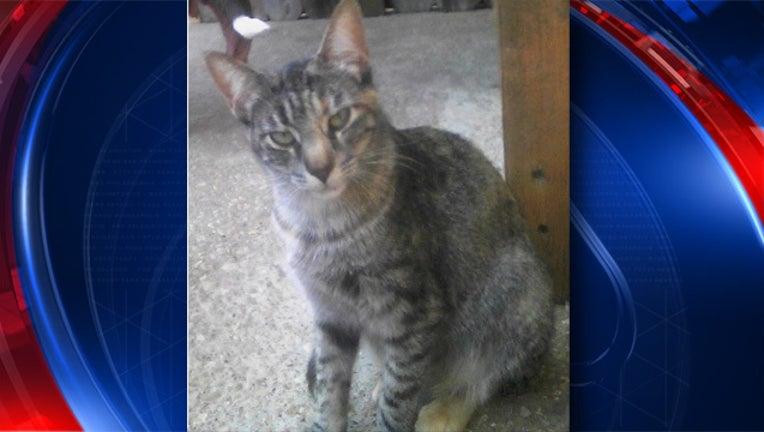 San Marcos rabies cat_1525988000634.jpg.jpg