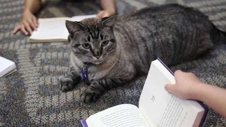 Texas-library-cat_1467422873143.jpg