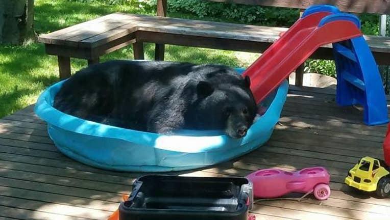 Bear In Kiddie Pool-402970
