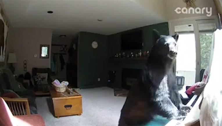 5d30c369-bear-plays-piano_1496444132596-402429.jpg