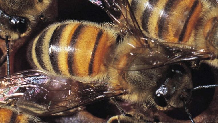 bees_1444941921525.jpg