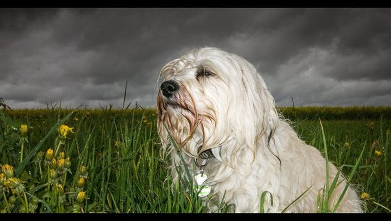 cute pup_1501440993982-408200.jpg