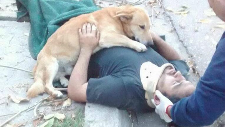 dog hug_1495069737531-404023.jpg