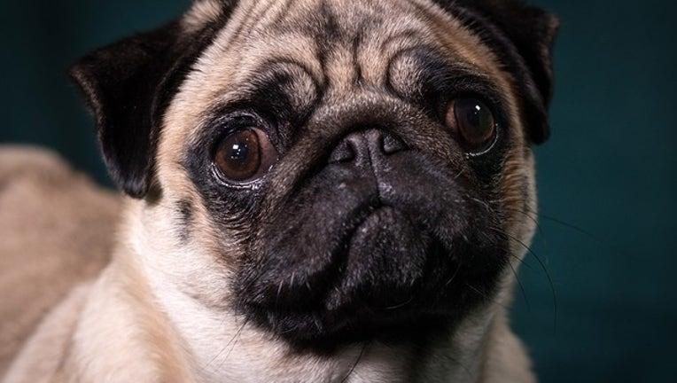 Getty_dog_022119-402429