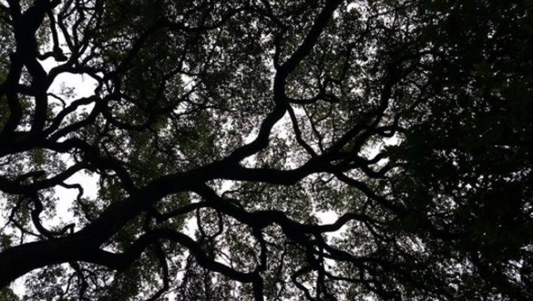 generic tree_1502485194645.jpg