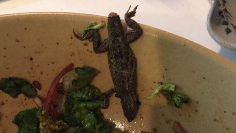 lizard in salad_1518020814833.PNG-407068.jpg