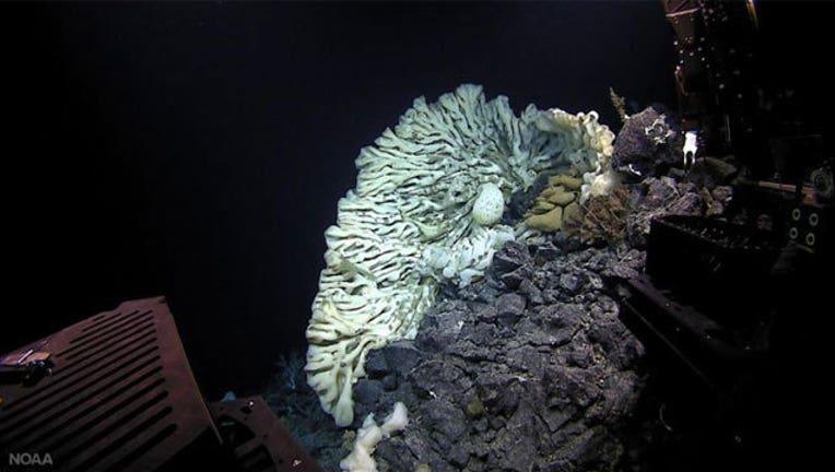 d91875e7-mini-van-sized-sponge_1464901331559.jpg