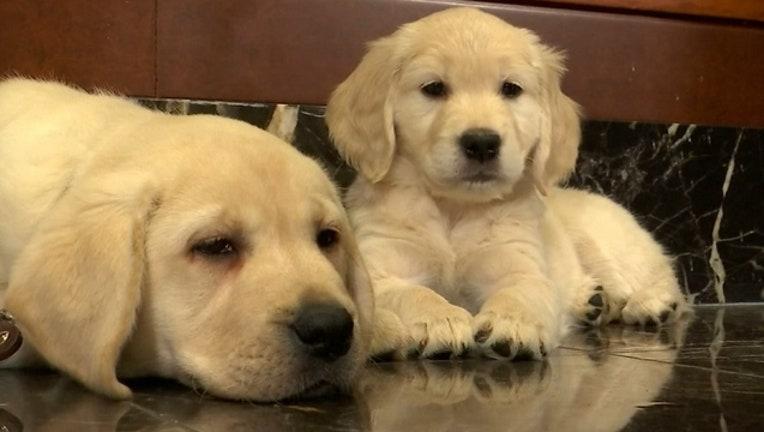 orlando-pet-friendly-dogs_1533858968009-402429.jpg