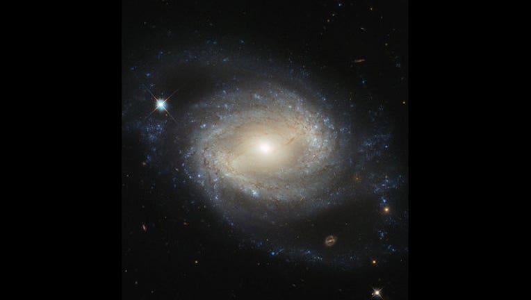 Elegant spiral hides a hungry monster_1444781325483-404023