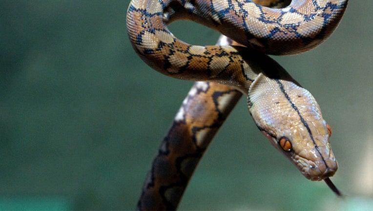 a1515422-snake-file_1497358563805-402970.jpg