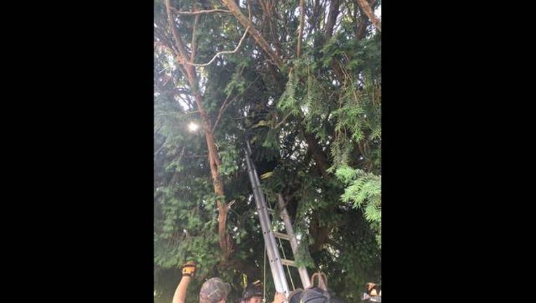 stuck-in-tree_1469042088304-402970.jpg