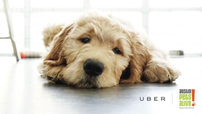 uberpuppies_1447961885904.jpg